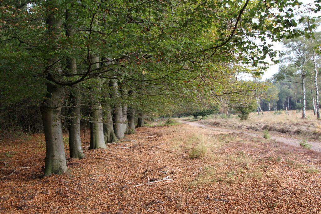 Zo mooi kan Nederland zijn. De schoonheid van Nationaal Park Veluwezoom in de herfst.