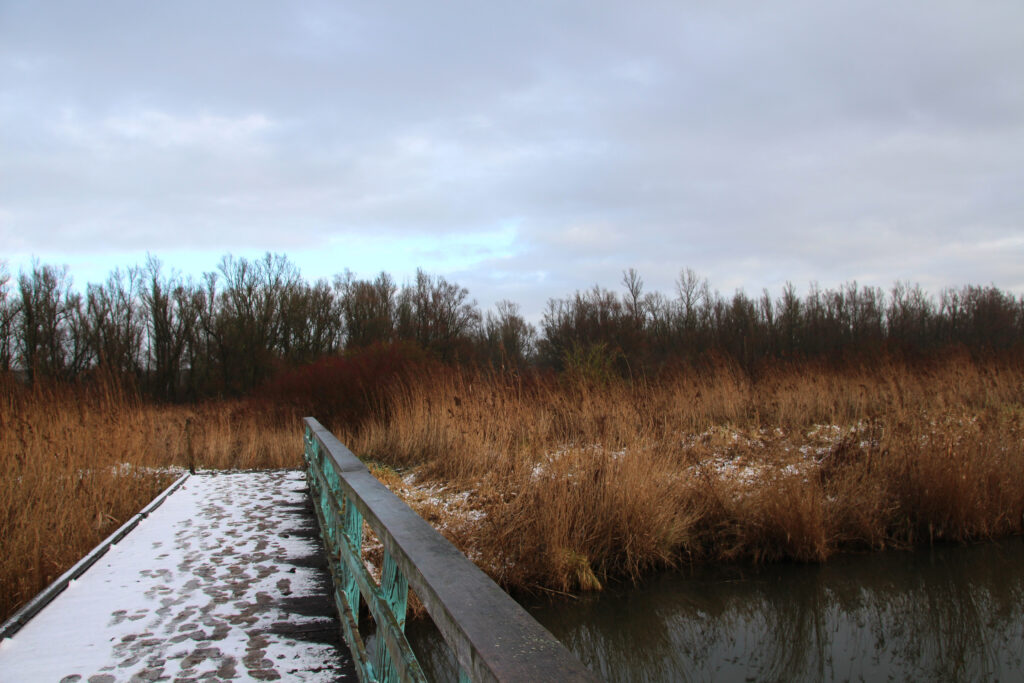 Winter in het NP Nieuw Land.