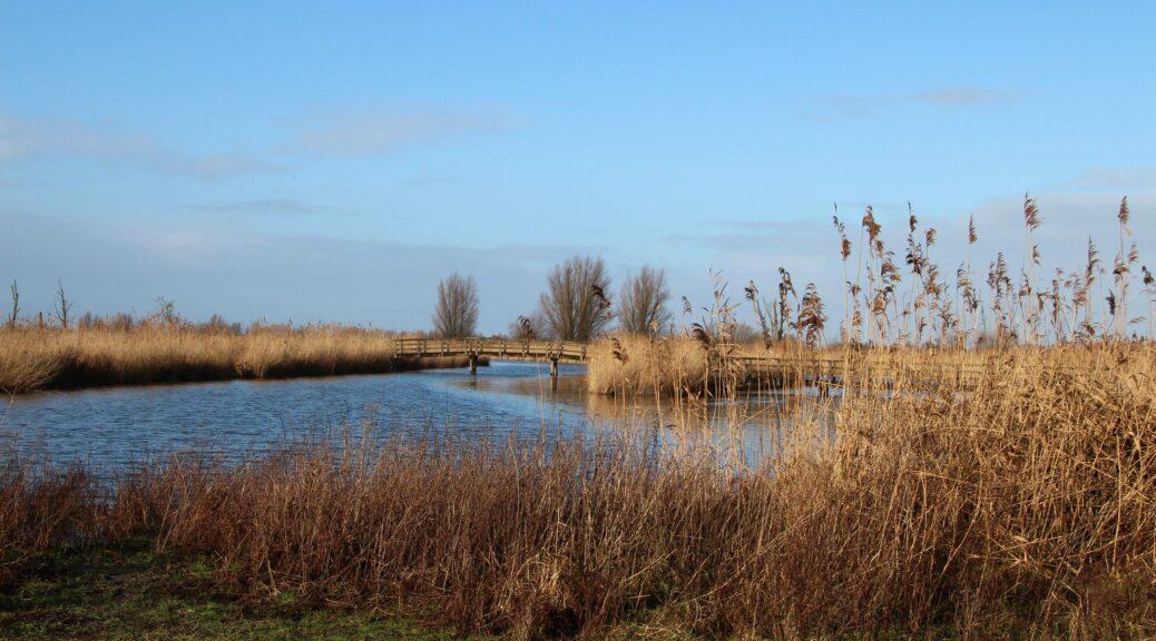 Zo zien wij de Oostvaardersplassen graag: water, riet en een blauwe lucht.