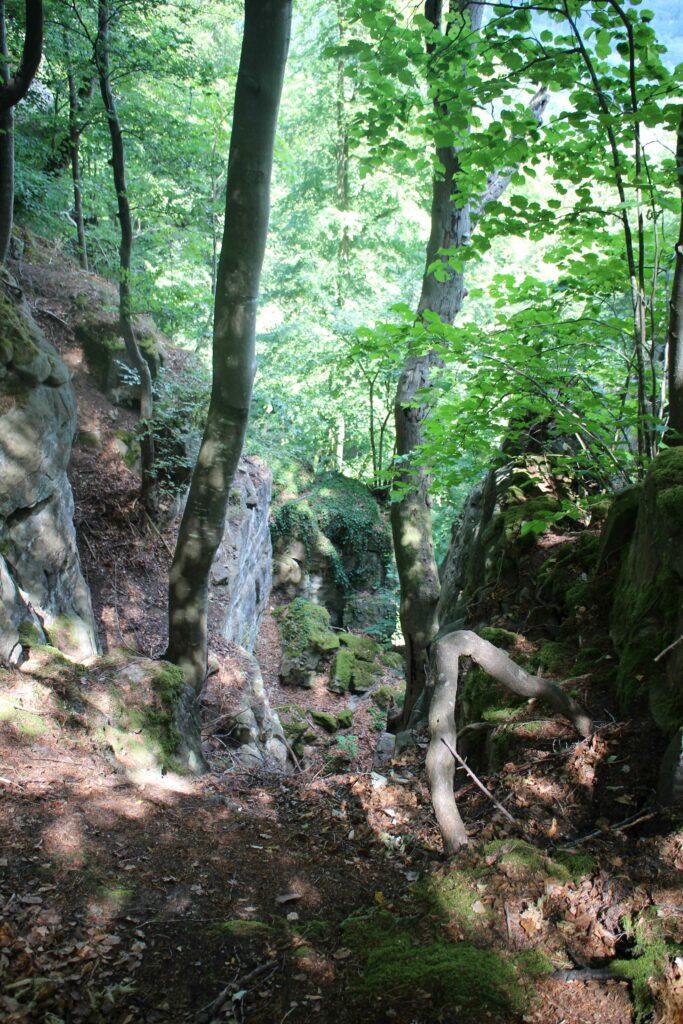Op de grens van Duitsland en Luxemburg ligt het natuurpark Süd Eifel.