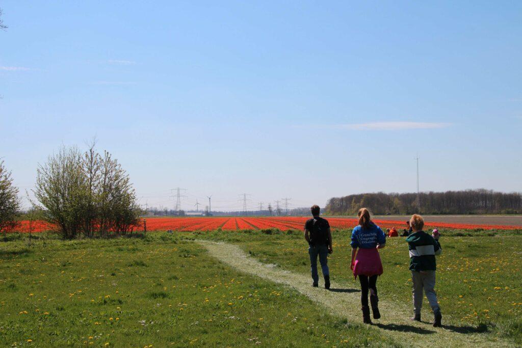 Er zijn twee wandelroutes uitgezet bij de Tulpenroute in Flevoland.