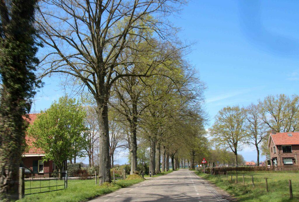 Hoge bomen langs de rustige wegen in de Achterhoek.