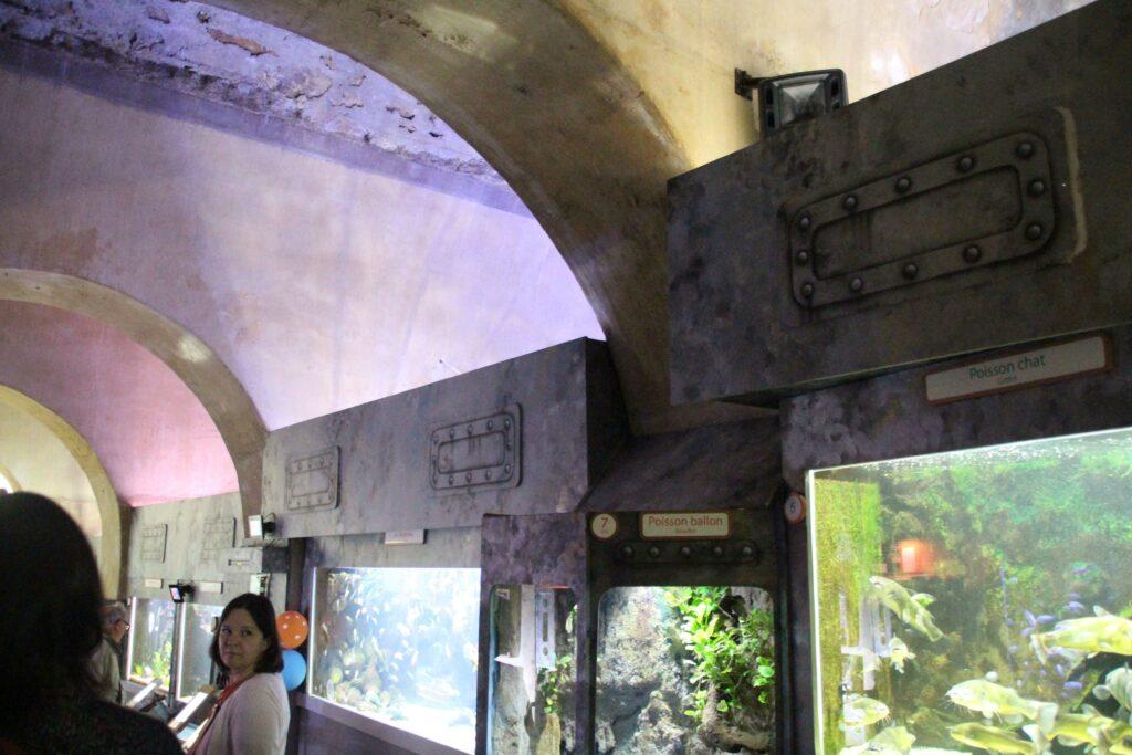In het Aquarium van Limoges kun je 300 soorten van over de hele wereld ontdekken.