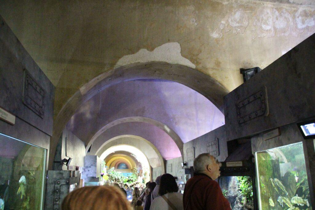 Het Aquarium van Limoges bevindt zich in een voormalig ondergronds waterreservoir van de stad.