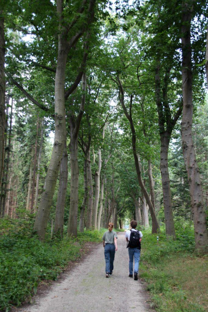 De Sterreboswandeling in Frederiksoord is 3 kilometer lang en loopt loopt door loopt langs de markante plaatsen hiervan.
